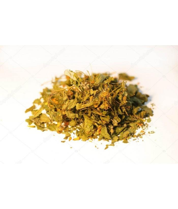Glistnik (jaskółcze ziele)